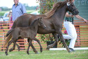 WFG-Tierzuchtberatung-Pferdehaltung