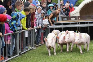 WFG-Tierzuchtberatung-Schweinehaltung